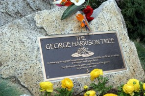Memorial tree for Beatle replanted, following beetle attack